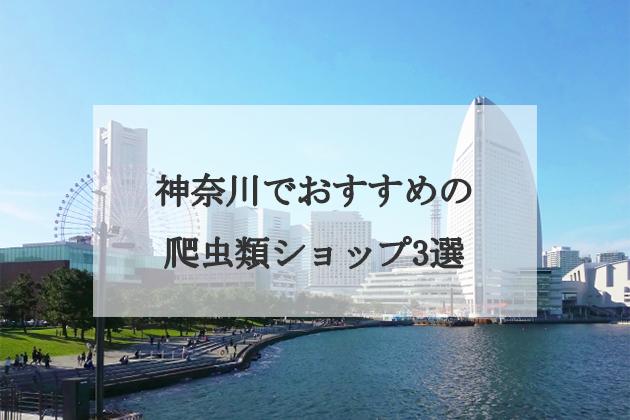神奈川でおすすめの爬虫類ショップ3選