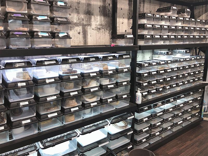 様々な種類のヘビ類が販売されているコーナー