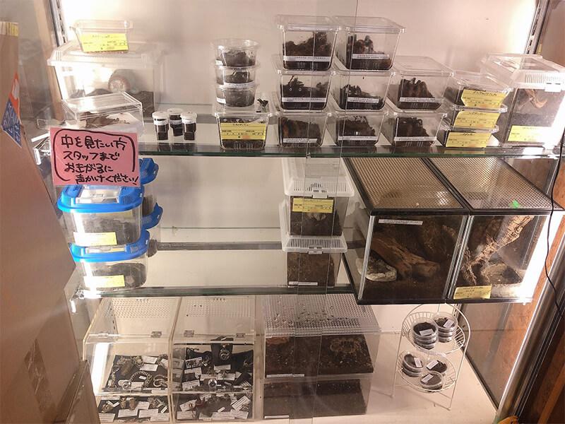 サソリやクモなどの奇虫が販売されているコーナー