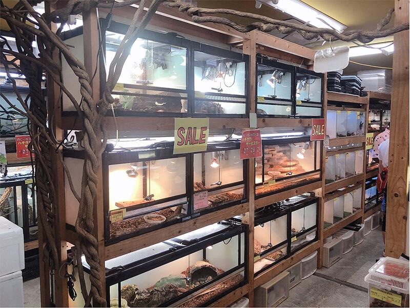 様々な種類の爬虫類が販売されているコーナー