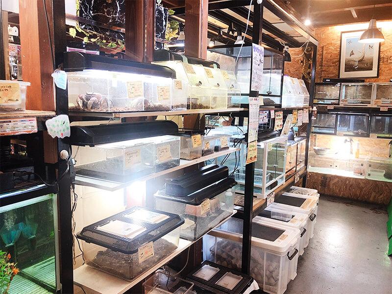 カニなどの珍しい生体も販売されているコーナー