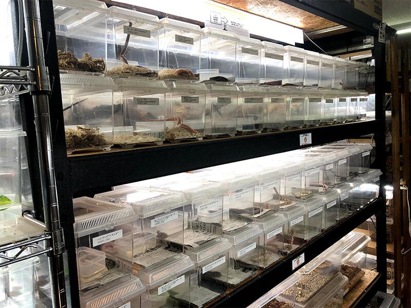 様々な種類のヘビが販売されているコーナー