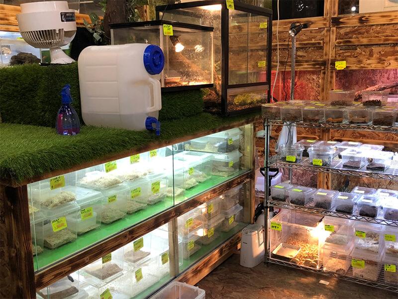 様々な爬虫類が販売されているコーナー