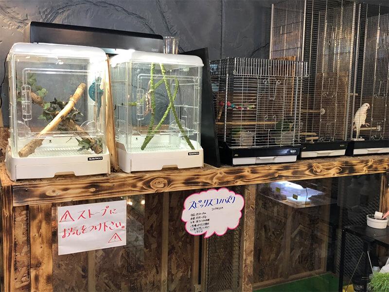 猛禽類やカメレオンが販売されているコーナー