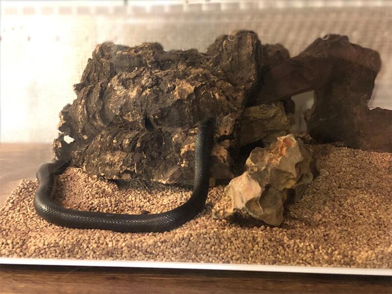 ヘビがシェルターの上にのぼる様子