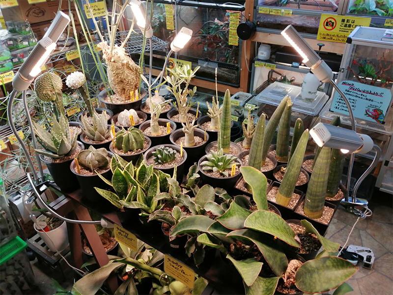 多くの植物が販売されているコーナー