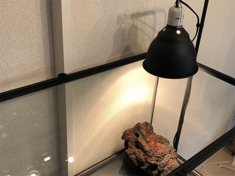 溶岩石を設置する