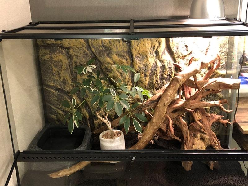 水入れと植物を設置